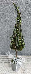 floristika - ukázka